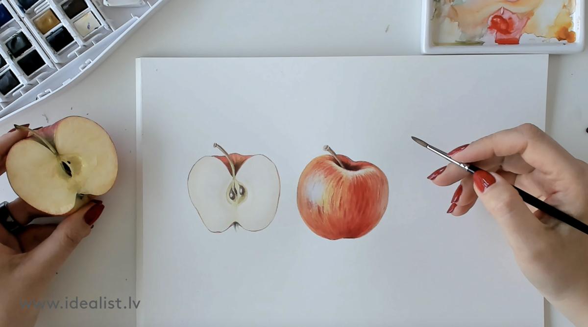 """Курс """"Основы ботанической иллюстрации"""" с Еленой Гринбергой"""