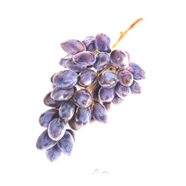 """No 02.11. Mini-kurss: """"Botaniskā ilustrācija ar krāsu zīmuļiem iesācējiem""""/ PIRMDIENĀS 18.00-20.30"""